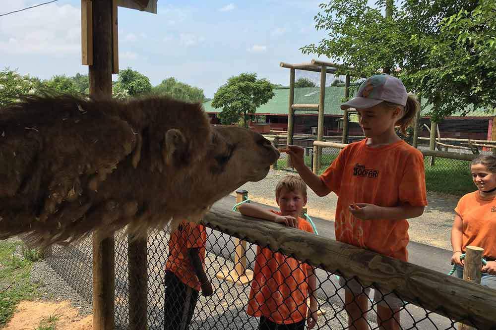 Roer's Zoofari (Adult + Child)